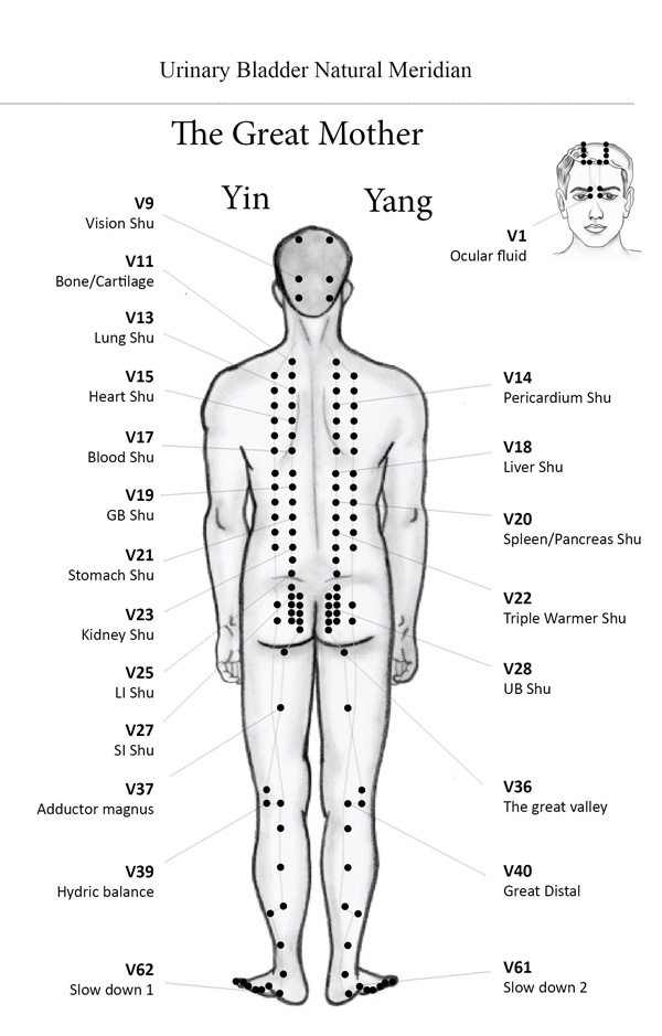 Traditional Chinese Medicine Work
